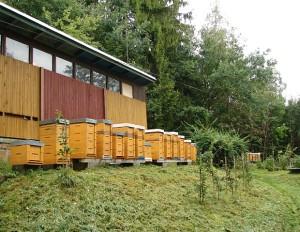 Zájezd na Valašsko – Pokusný včelín Zubří