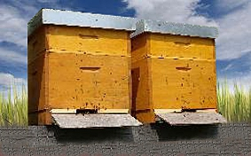 Krajské dotace na obnovu úlů