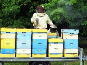 Malá fotoreportáž z Kurzu pro začínající včelaře