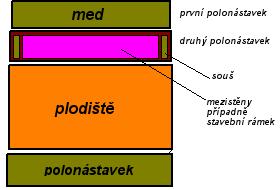 mednik2_ED
