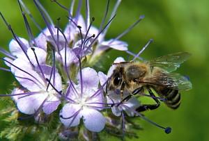 Spousta včel nepřežila tuto zimu