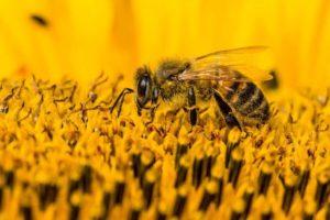 I včely jsou občas náladové!