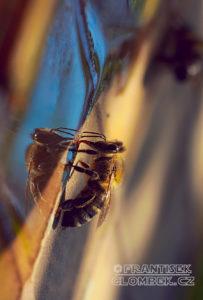 Včely přestávají tančit. Na našich polích už to zřejmě nemá smysl